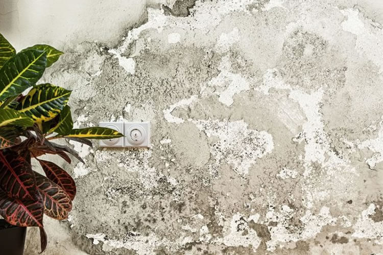 condensación o humedades en paredes