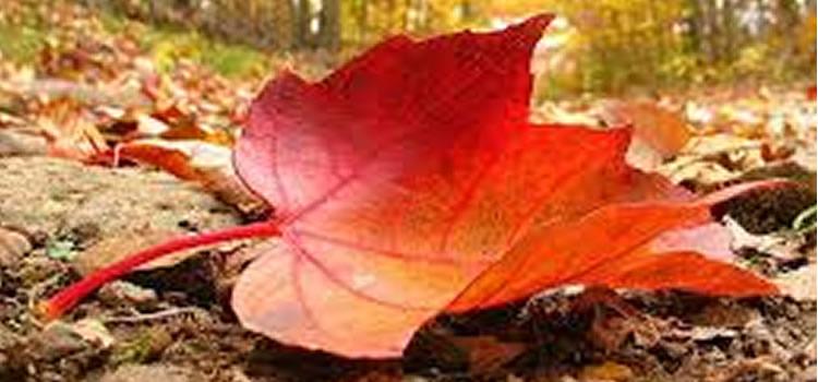humedades-otoño