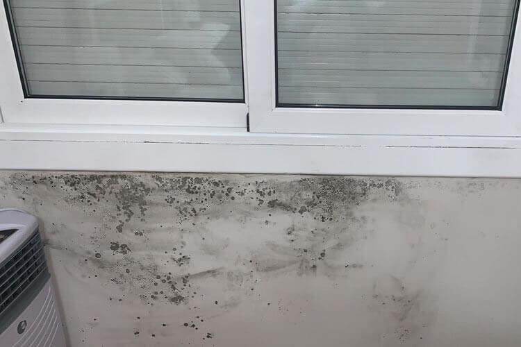 limpiar moho paredes