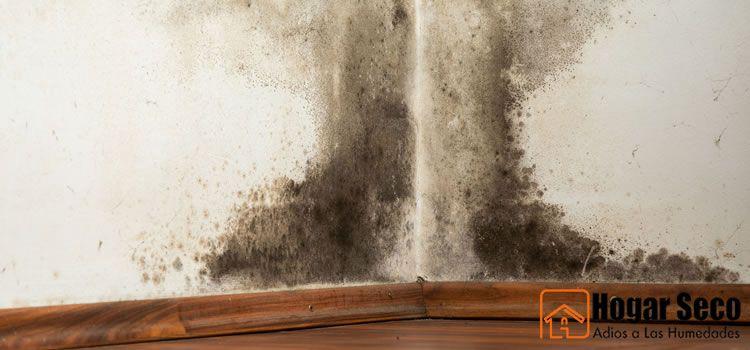 C mo eliminar el moho en de las paredes en casa - Moho en la pared ...