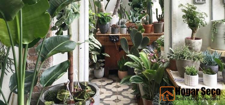 las plantas y la humedad